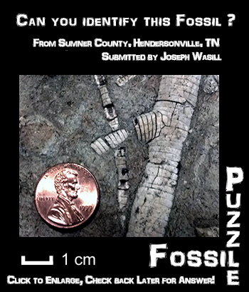 Fossil Puzzle